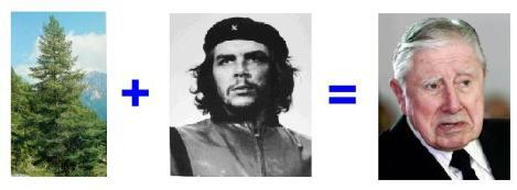 Pino Che!